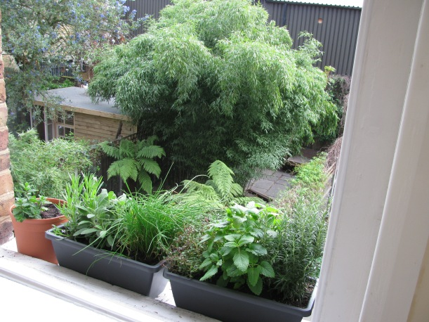 Herb Garden on Window Sill